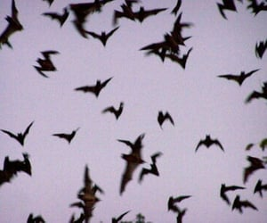 bats, grunge, and sky image