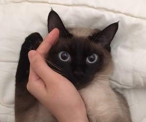cat, kitten, and kpop image