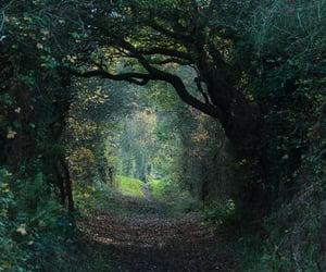 explore, green, and magic image