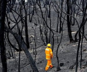australia, disaster, and fire image
