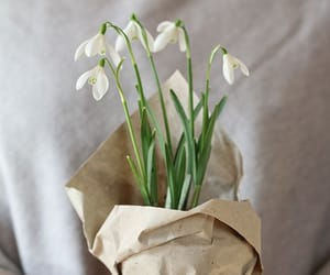 flowers and snowdrop image