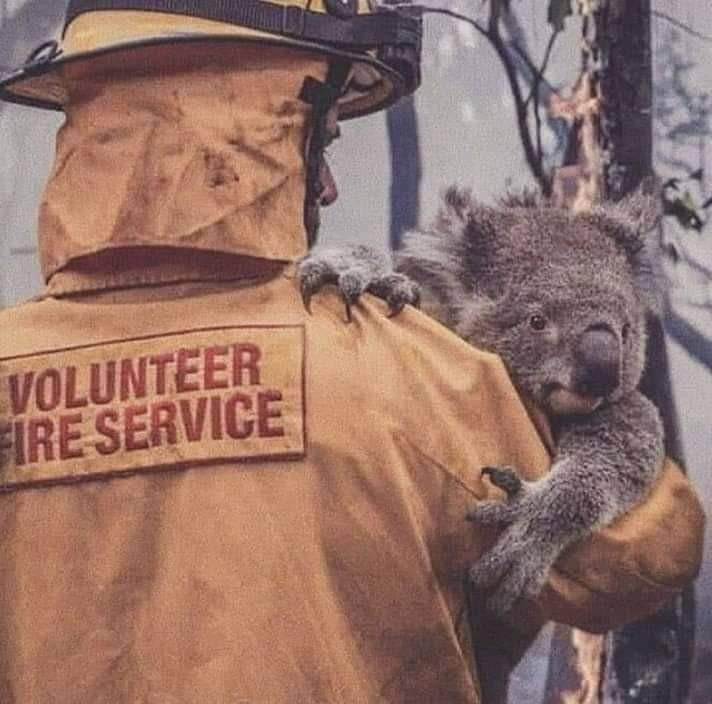 australia, Koala, and animal image