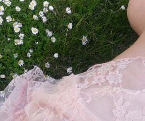 flowers, pink, and grass image