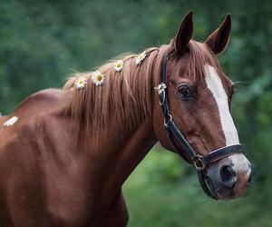 daisy, horse, and pony image