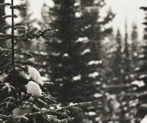cold, green, and snow image