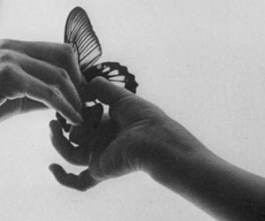 butterfly, delicate, and girl image