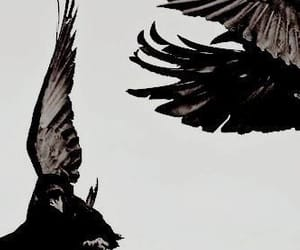 dark, aesthetic, and crow image