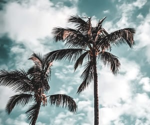 hawaii, lightroom, and palmtrees image