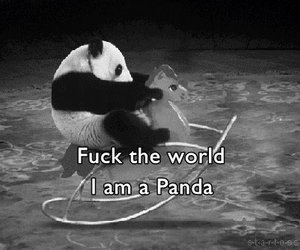 fuck, panda, and pony image