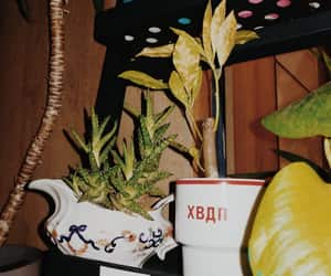 plants and vintage image