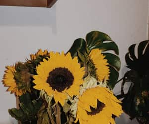 plants, vintage, and sunflowers image