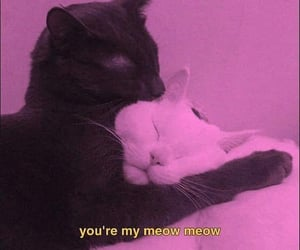 black, cats, and meow image