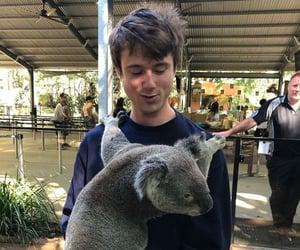 boy, hug, and Koala image