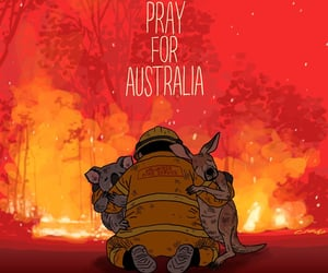 animals, australia, and firefighter image