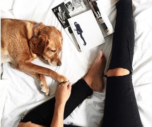 dog, pet, and beautiful image