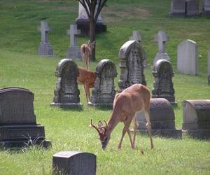 angelic, creepy cute, and deer image