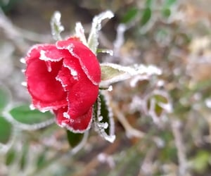 beautiful, could, and ice image