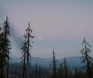 crescent, dusk, and forest image