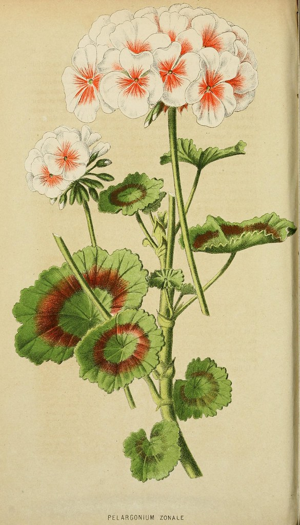 botany, plants, and periodicals image