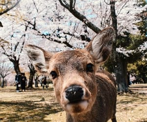 animals, asia, and deer image