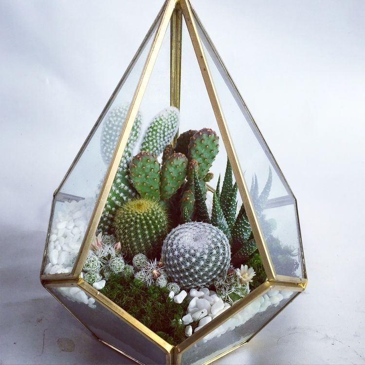 cactus, decor, and gift image