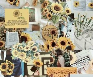 yellow, sunflower, and wallpaper image
