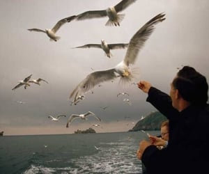 bird, theme, and sea image