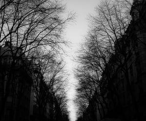 dark forest, goth, and gothic scene image