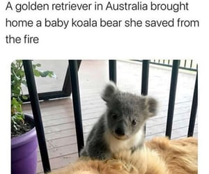 adorable, animals, and australia image