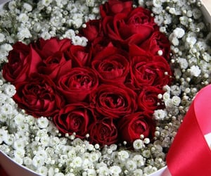 amour, cadeau, and rouge image