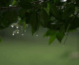 gif, gif raining nature, and leaves green beautiful image