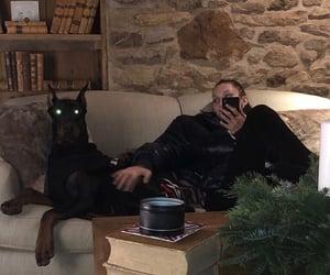 dog, bella hadid, and aesthetic image