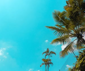 blue, brazil, and trees image