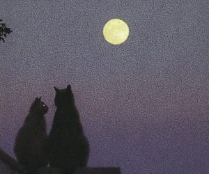 cat, article, and moon image
