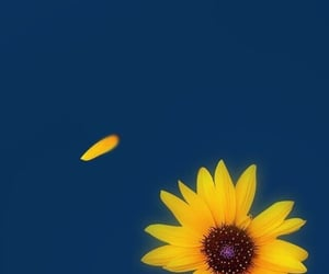 sunflower and wallpaper image