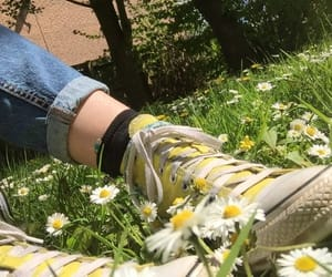 converse, daisy, and flowers image
