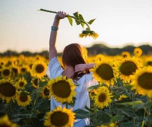 sunflowers, yellow, and hufflepuff image