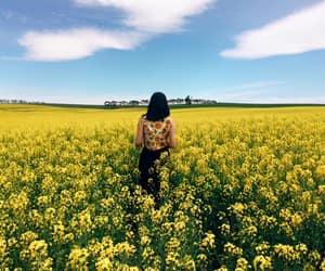 flowers, yellow, and hufflepuff image