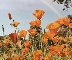 flowers, orange, and rainbow image
