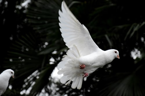 dove, respect, and grace image