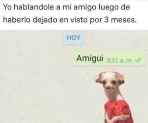 amigos, humor, and chiste image