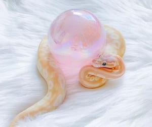aesthetic, animals, and pastel image