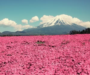 pink, flowers, and mountains image