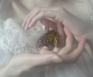 aesthetic, butterfly, and magic image