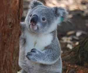 adorable, animals, and australia image