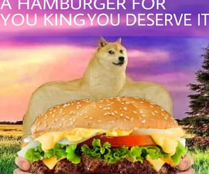 dog, doge, and food image