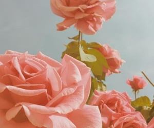 rose, peach, and flowers image