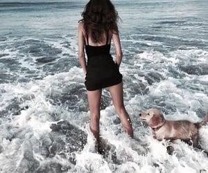 beach, dog, and fashion image
