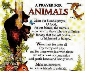 animals, nature, and pray image