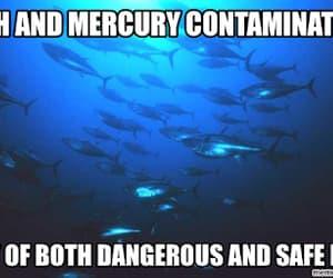 seafood, mercury contamination, and fish image